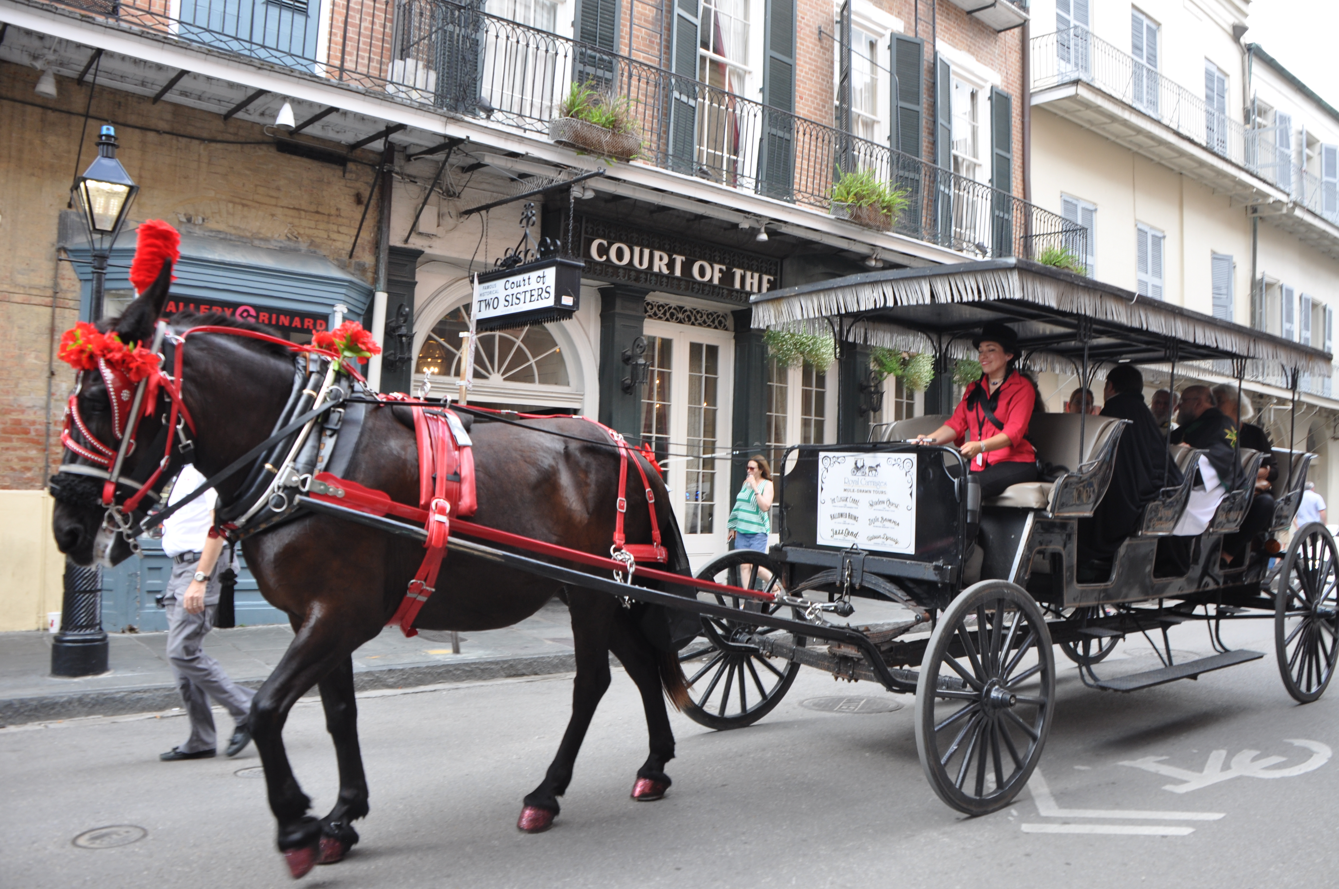 New Orleans Ghost Tours Horse Carriage