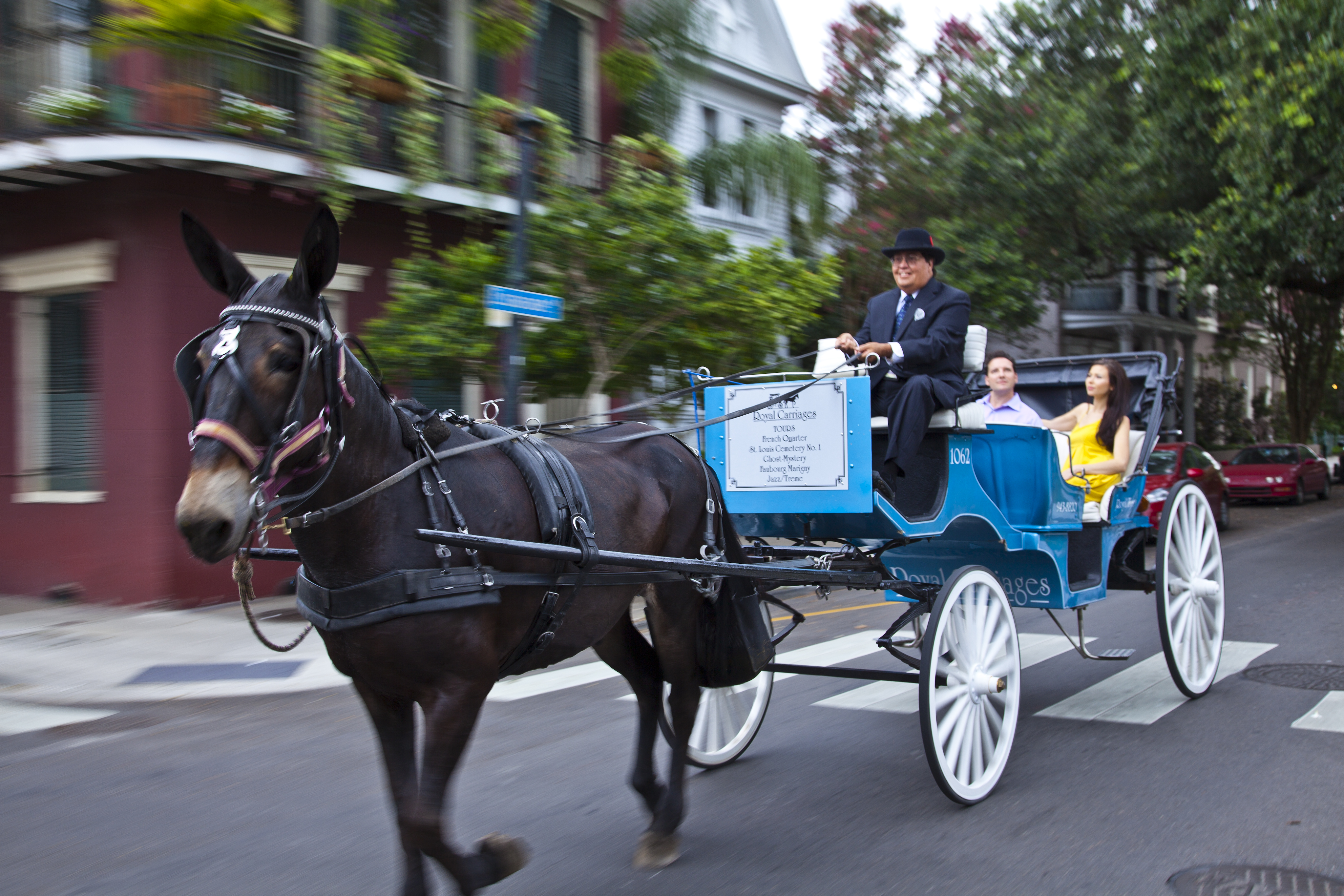 New Orleans Royal Carriage Tours